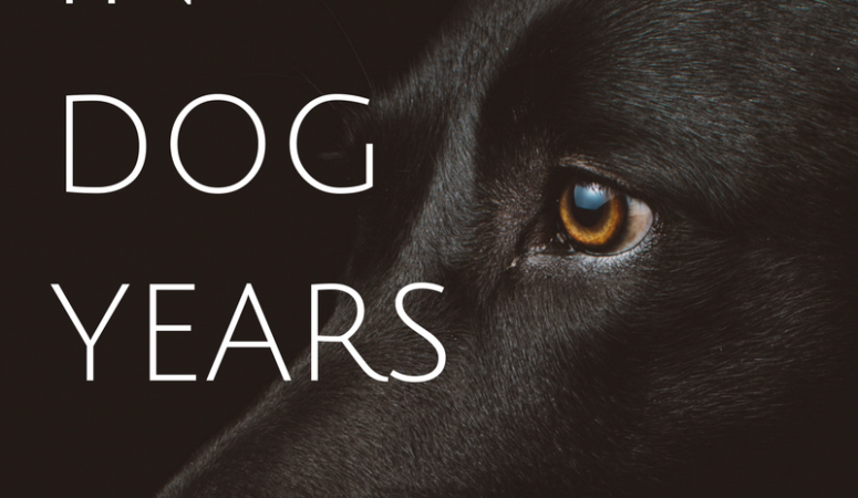 A decade in dog years